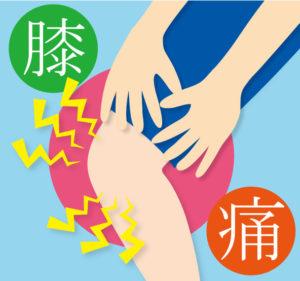 膝 半月板 イラスト