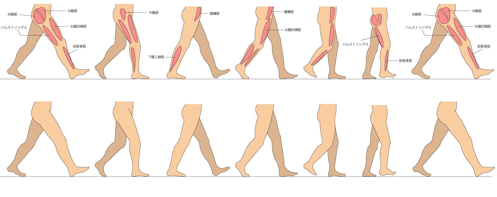 歩行周期 イラスト